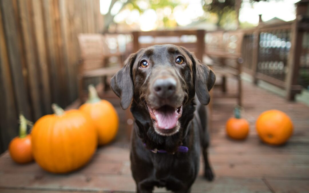 Celebrate Howl-o-ween with PetSmart!